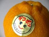 長崎県産《温室デコポン》JAながさき全農