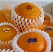 《清見オレンジ&デリッシュネーブル》国産オレンジセット
