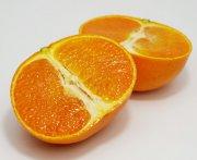 長崎県産《せとか》幻の高級柑橘