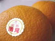 佐賀県松浦東部産《清見オレンジ》温州みかん×オレンジ