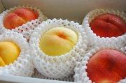 もも食べ比べbox/5種類の桃が揃い踏み