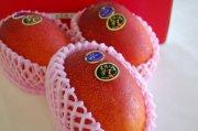宮崎県産《太陽のタマゴ》国産マンゴの最高級ブランド
