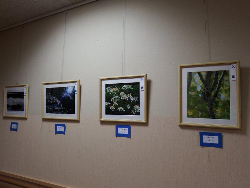 『県民の森フォトコンテスト2020優秀作品展』開催中