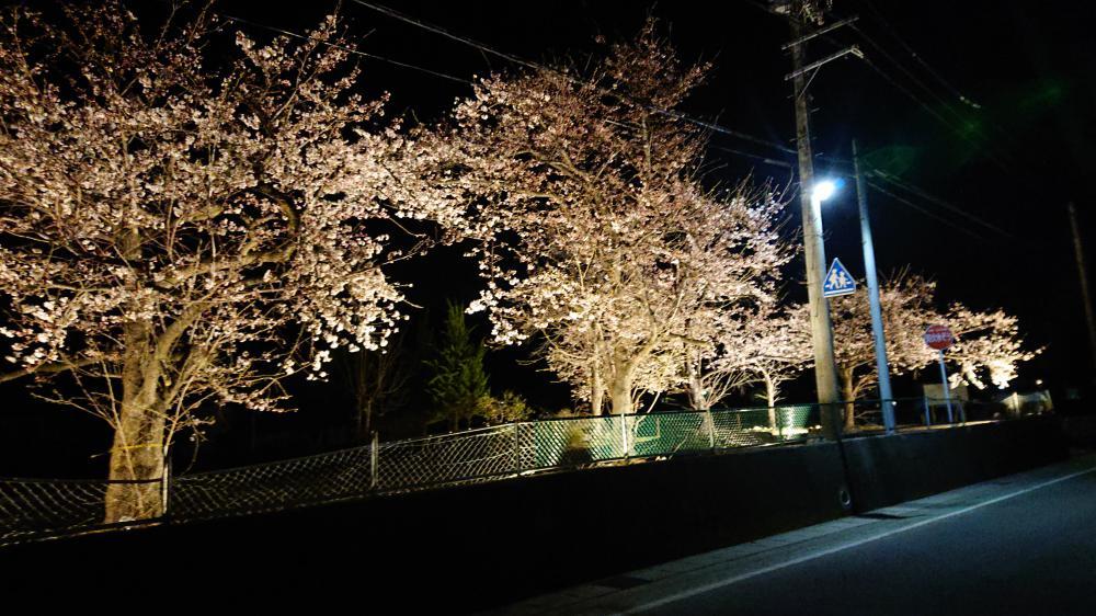 桜!ライトアップ 綺麗です観に来て下さい!:画像