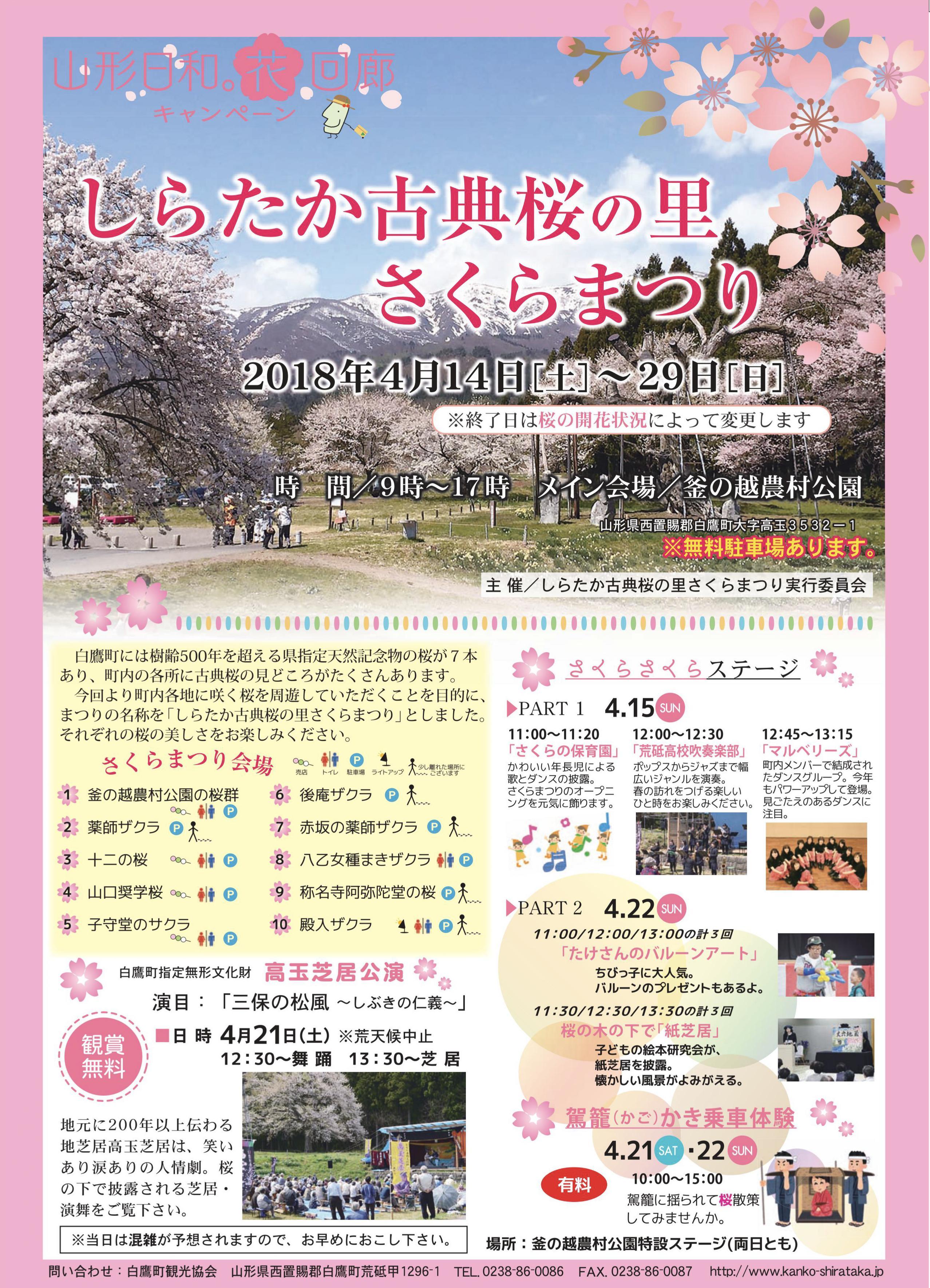しらたか古典桜の里さくらまつり:画像
