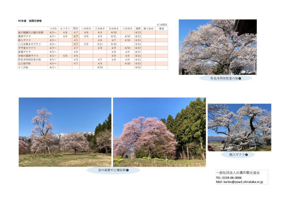 4月14日(水)桜開花情報:画像