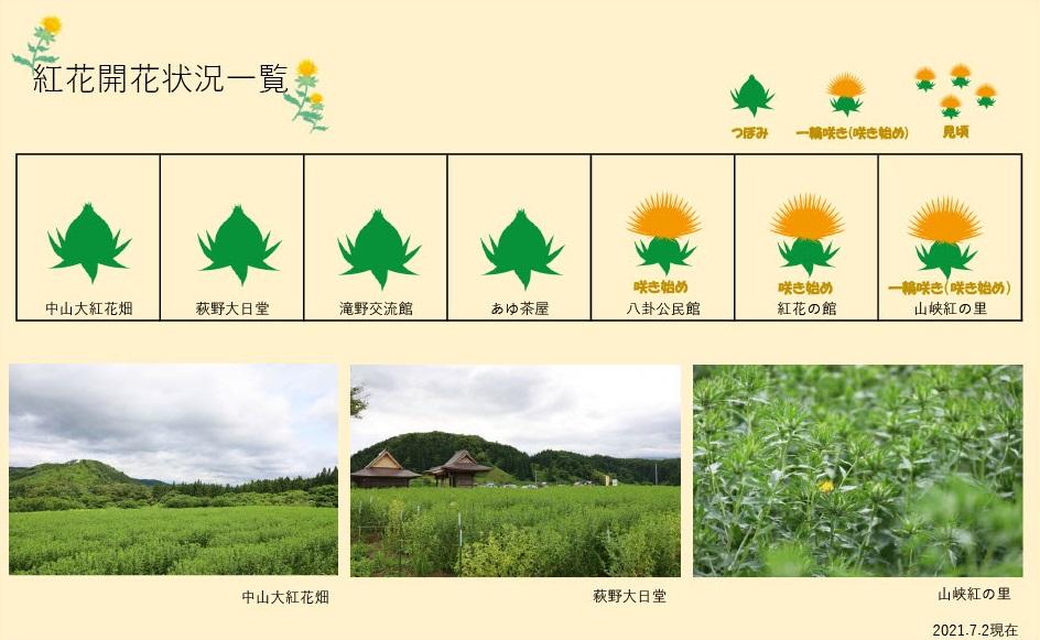 2021.7.2 紅花畑:画像