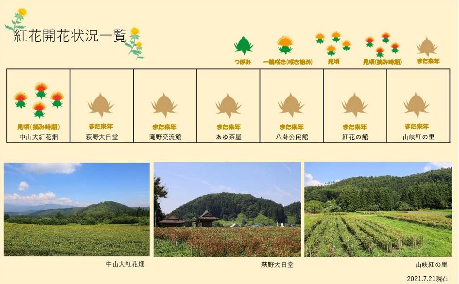 21.7.21 紅花畑:画像