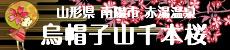 烏帽子山千本桜バナー(230×50px)