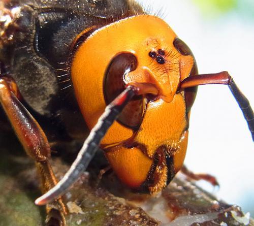 ハチ対策 蜂対策 :画像