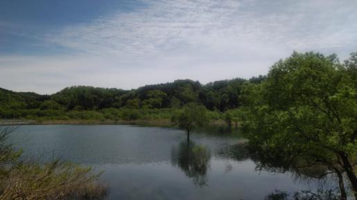 2021/05/24 20:25/☆水の中から木々が生えている場所!(^^)!☆