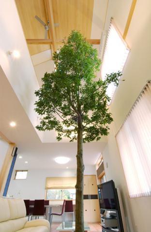 リビングにいながら森林浴のできる新空間:画像