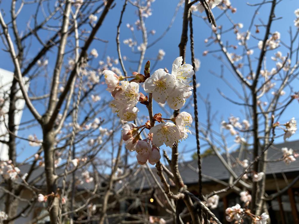春の訪れのこと:画像