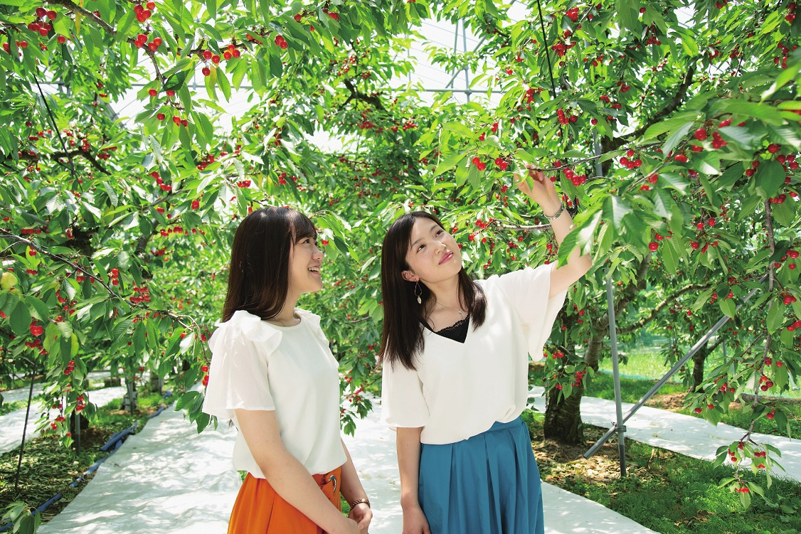 天童市観光物産協会推奨果樹園