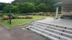 村山のバラ咲き始めました見頃です!:画像