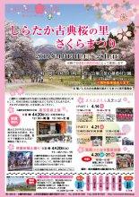 2019 しらたか古典桜の里さくらまつり :画像