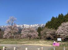 白鷹古典桜の里 紹介ムービー:画像