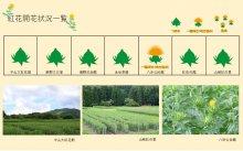 2021.6.28 紅花畑:画像