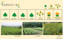 2021.7.4 紅花畑:画像