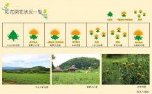 2021.7.6 紅花畑:画像