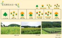 2021.7.9 紅花畑:画像