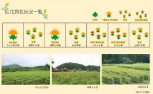 21.7.11 紅花畑:画像