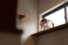 中山建売住宅 With CAT 撮影はいりました〜♪:画像