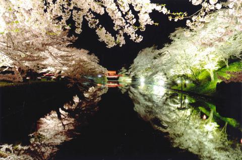 ライトアップされた松が岬公園:画像