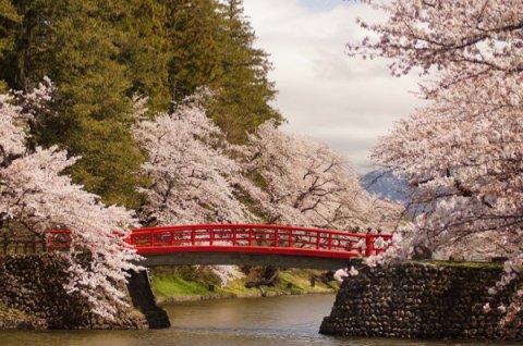 2015-4-21 松が岬公園の桜:画像