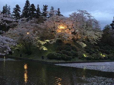 2019-4-25 上杉神社の桜:画像