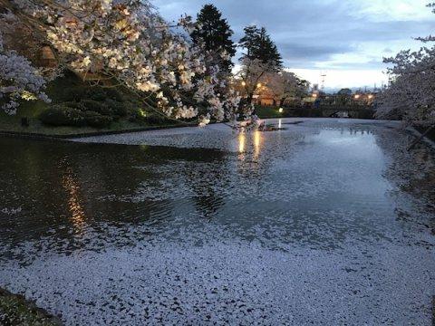 2019-4-25 上杉神社の夜桜:画像