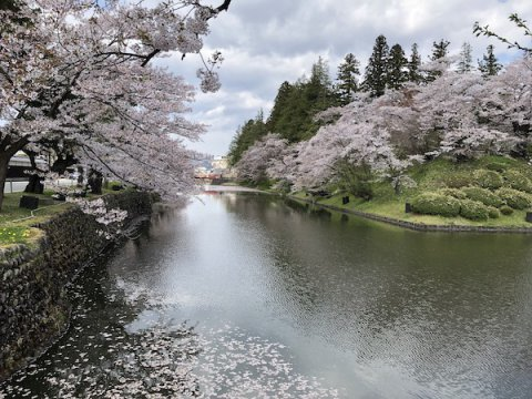 2020-4-28 上杉神社の桜:画像