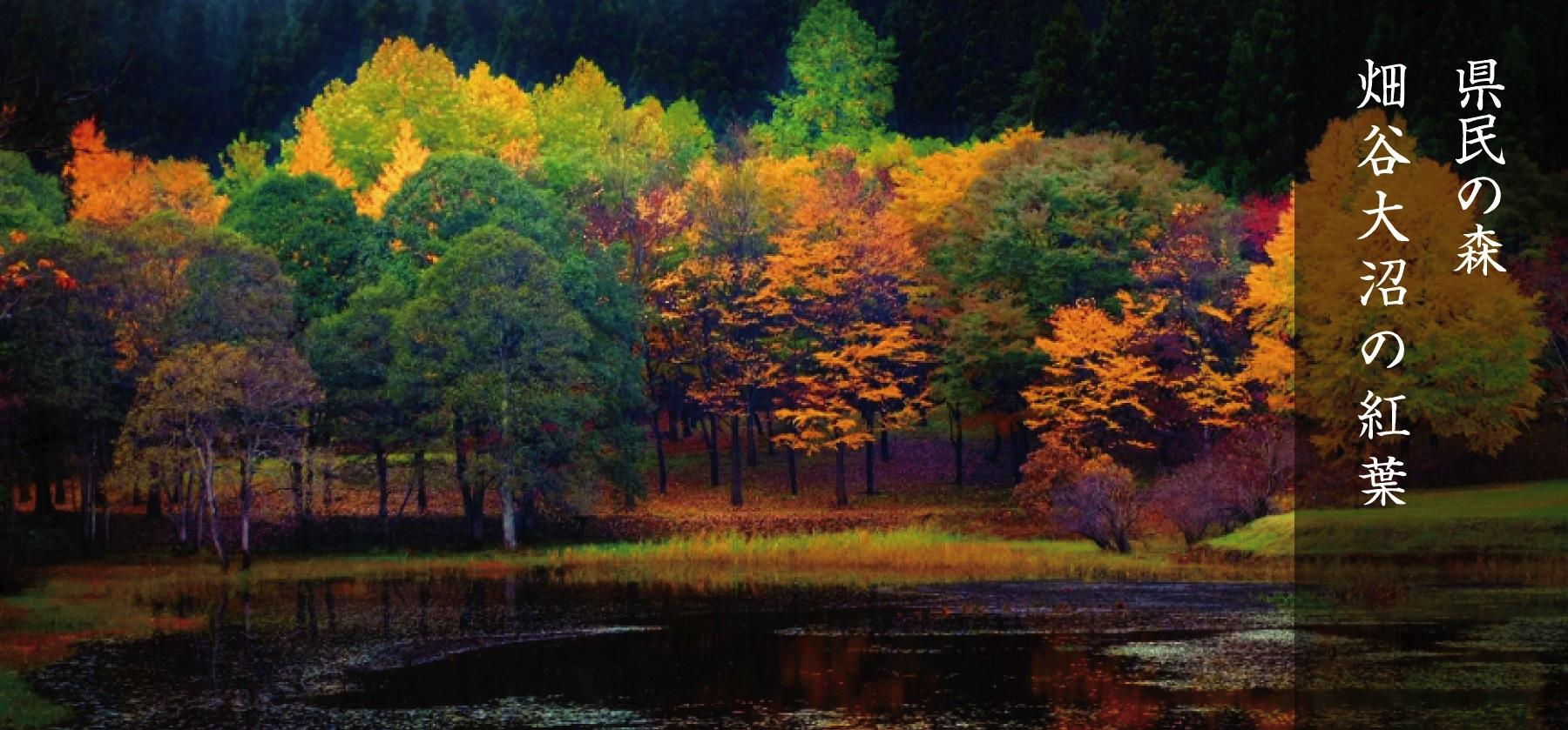 県民の森・畑谷大沼の紅葉