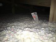天井の断熱材監査を行いました。:画像
