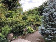 来春の庭のために:画像