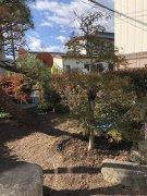 庭の植栽:画像