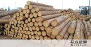 〜木材ウッドショックの影響〜:画像