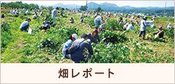 畑レポート