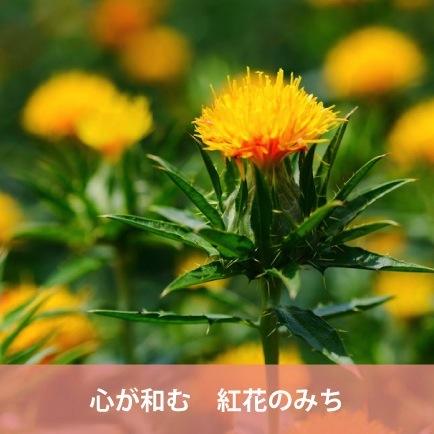 心安定下來的紅花的滿(山形縣)