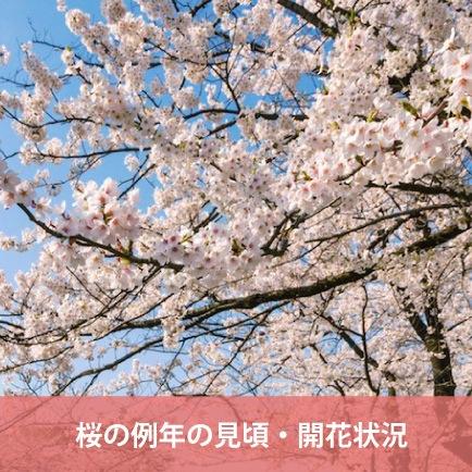 山形県の桜の例年の見頃・開花状況