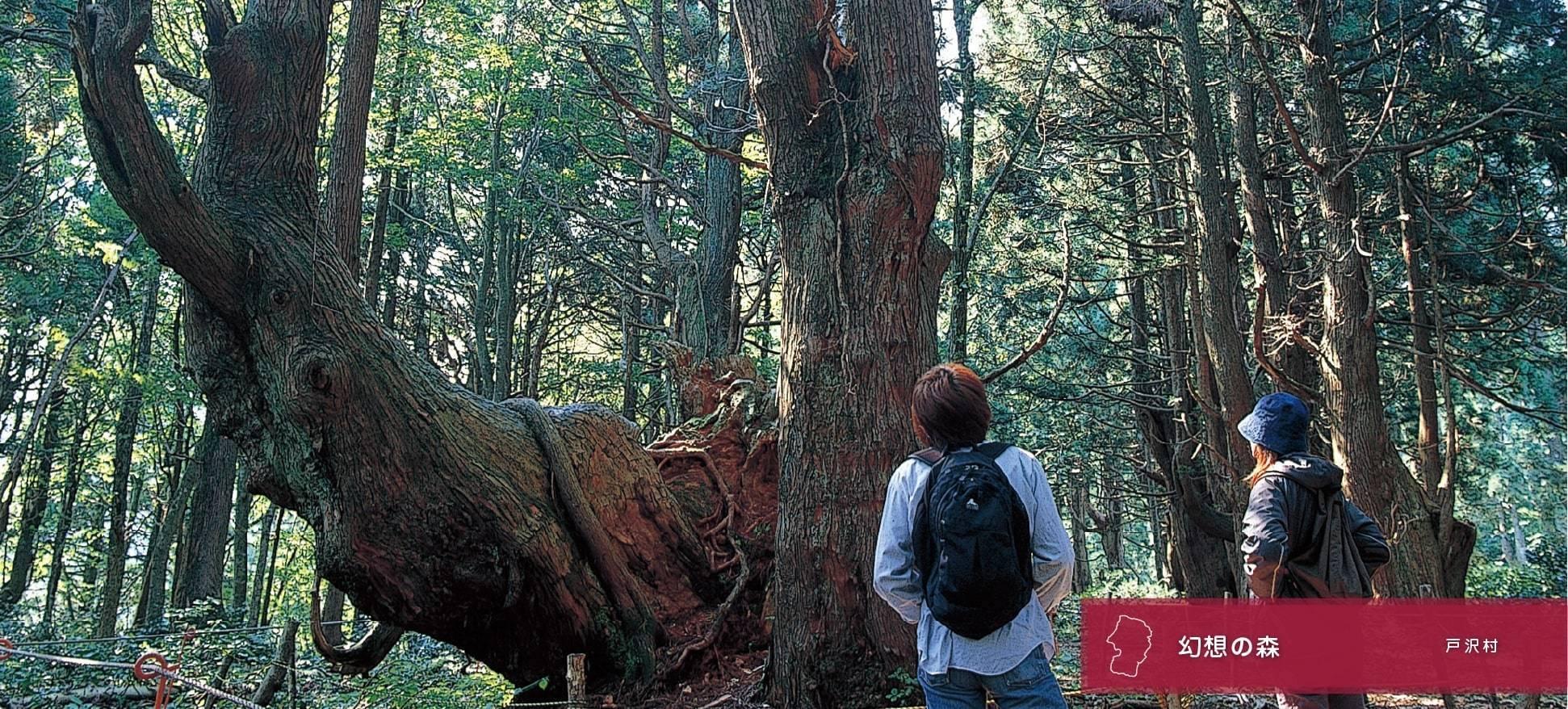 幻想的森林