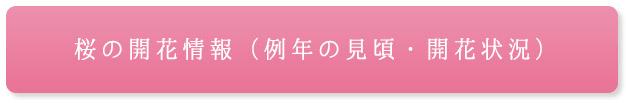 桜の開花情報(例年の見頃・開花状況)